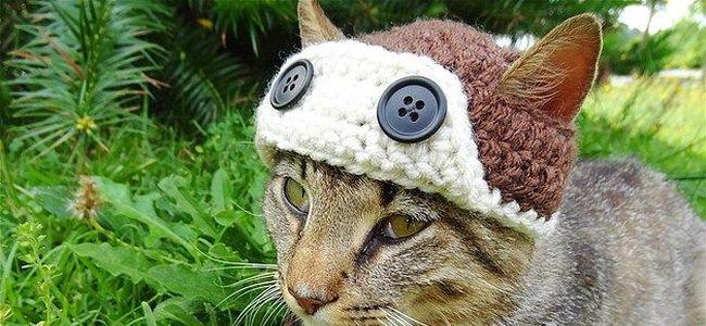Кот в шапке