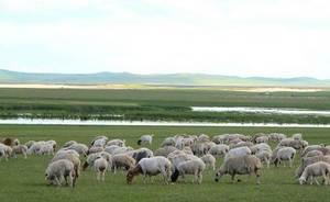 ovcevodstvo-kak-biznes-dlya-nachinayushhego-fermera-1