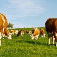 Единый сельскохозяйственный налог