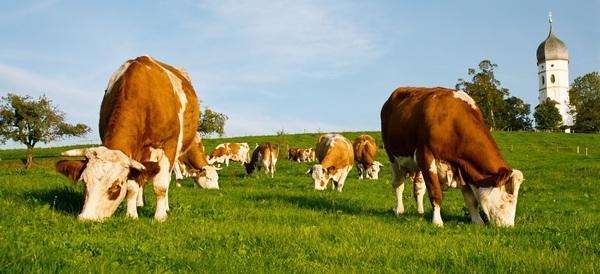 Единый сельскохозяйственный налог единый налог для производителей сельскохозяйственной продукции