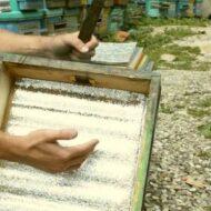 Пчеловодство как успешный и перспективный бизнес