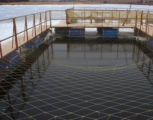 razvedenie-ryby-v-iskusstvennyx-vodoemax-kak-biznes-2