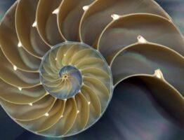 Числа Фибоначчи в природе