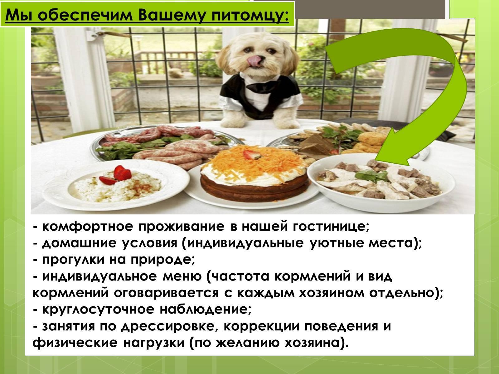 Гостиница для домашних животных