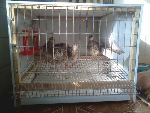Птицы у клетке